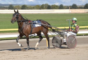 Summer harness racing action to commence on Monday