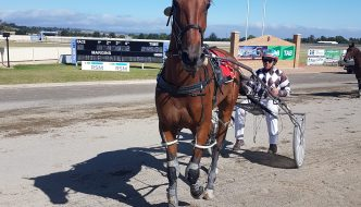 Stanley Ross Robyn is one of 2 Goulburn trained horses seeking the Goulburn Cup