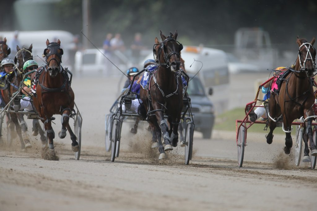 Harness racing action at the Goulburn Paceway